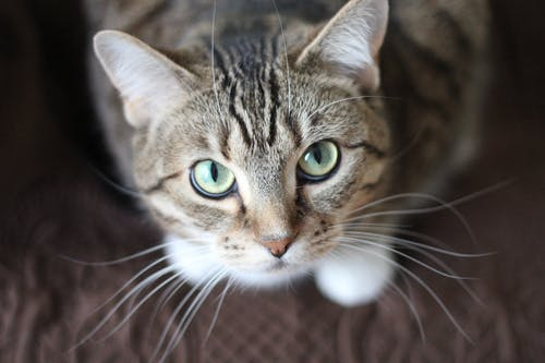 The Vaccinations Your Cat Needs