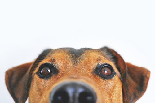 The Importance Of Pet Vaccination