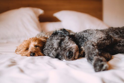 Taking Care of Your New Puppy: A Step-by-Step Guide